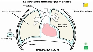 Respiration : relation pression-volume